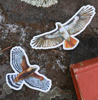Hawk Stickers by Coyote Brush Studios
