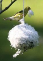 Goldfinch at Nesting Material