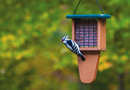 Suet Feeder with Downy Woodpecker