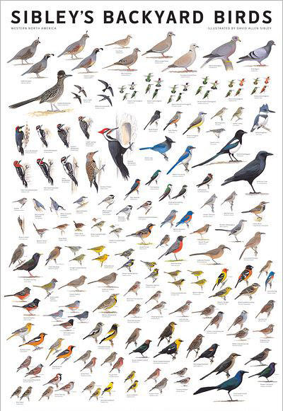 9/14/14: Sibley's Backyard Birds Poster - Wild Birds Unlimited - Nature Shop